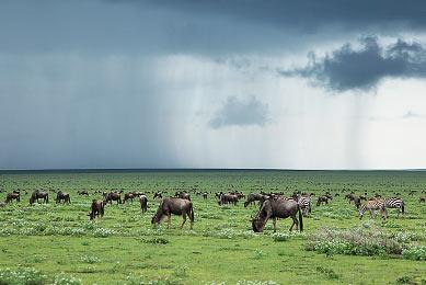 migration_Serengeti