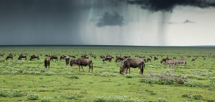 © Safari et trek Tanzanie