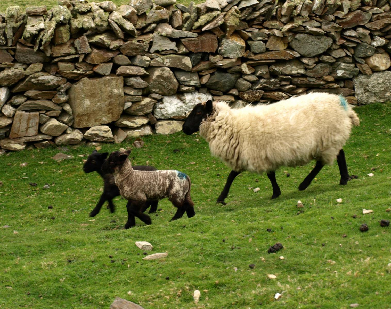 Irlande  LE GRAND TOUR D'IRLANDE (en liberté)   Trek & Randonnée