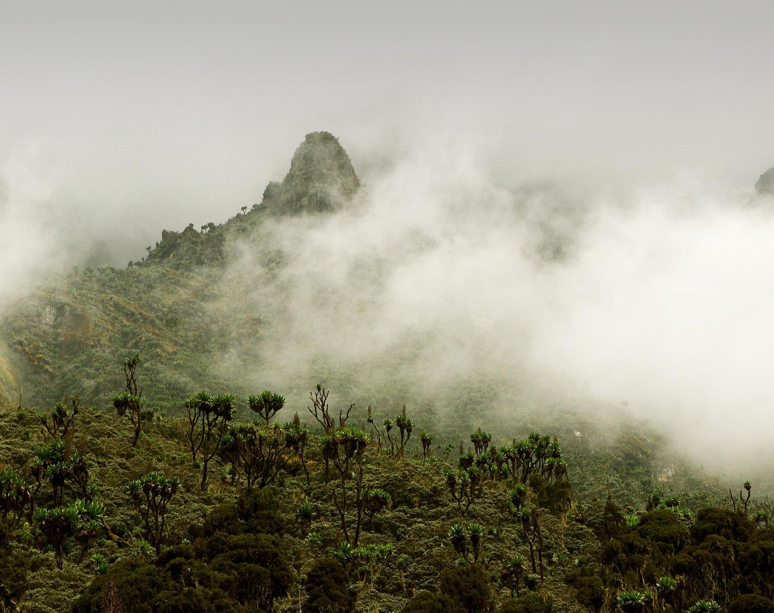 Ouganda  Montagnes et Primates   Trek & Randonnée Observation nature