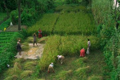 Sentiers peu fréquentés Népal