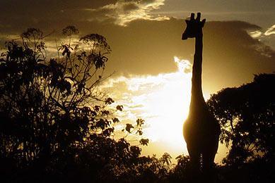 Safari aventure Tanzanie